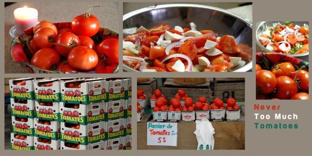 Toni's Tomatoes