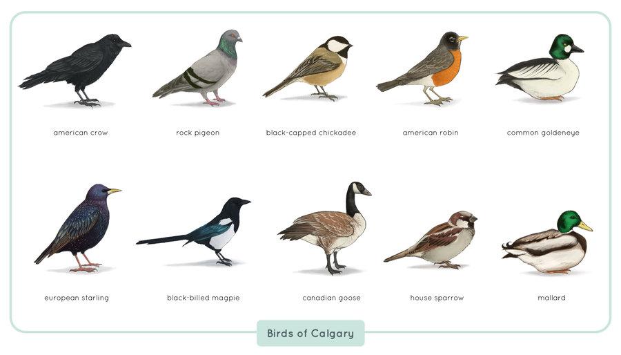 Calgary Birds Inglewood Bird Sanctuary And Nature Centre